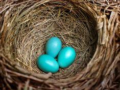 Bird Nest Nature Photography Nest Wall Art Photo Prints Birds | Etsy Fine Art Photography, Nature Photography, Photography Guide, American Robin, Blue Eggs, Spring Birds, Green Wall Art, Thing 1, Rustic Wall Art