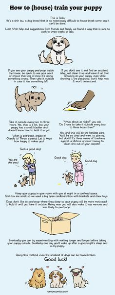 How to house break your pup by humon.deviantart.com on @deviantART - Some friendly, artistic advice about house-training your human - I MEAN DOG.