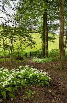 The gate (England)
