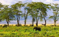 elephant-nature-wallpaper-1280x800-download-free-desktop-wallpapers