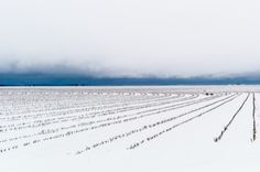 Snow outside Wall, Texas - Artworks | Buy Original and Affordable Art work online | Curious Duke Gallery