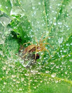 tsū is a free social network and payment platform that shares up to 90% of revenues with its users.You can register here : tsu.co/iammiky #tsu #tsū #social #network #users #free #friends #originalcontent #spider #water #nature