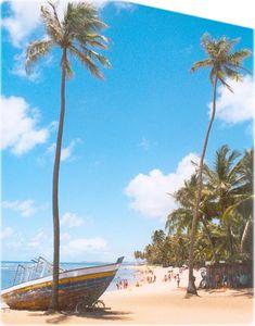 Praia do Forte | Bahia - Brazil