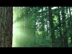 Séance de relaxation guidée avec bruitage de la nature et musique - YouTube