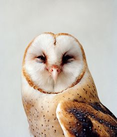 Barn owl. There is just a certain beauty about owls. I love em