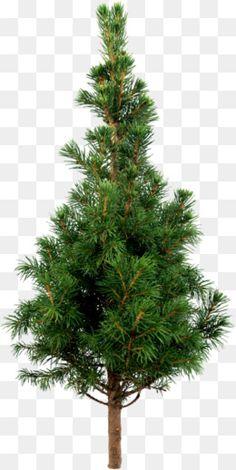 나무,소나무,식물,그린 Tree Photoshop, Photoshop Design, Tree Cut Out, Architecture Graphics, Landscape Architecture, Green Screen Backgrounds, 3d Texture, Plant Pictures, Tree Silhouette