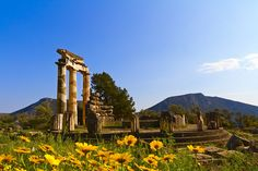Delphi - the impressive archaelogical site, lost among the trees. Visit the the Oracle of Delphi for a unique, ancient experience! #Greece #Delphi #Terrabook #Greece #Delphi #Terrabook #Travel #GreeceTravel #GreecePhotografy #GreekPhotos #Traveling #Travelling #Holiday