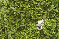 Hedge troll by Elke Vogelsang on 500px