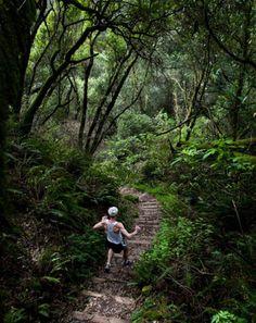 best running trails Dipsea Trail