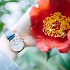 Can spring stay a little bit longer please🌸 Wood Watch, Daniel Wellington, Flower, Spring, Beautiful, Style, Fashion, Wooden Clock, Swag