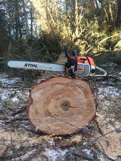 Stihl 038 and big Hemlock Logging Equipment, Heavy Equipment, Outdoor Power Equipment, Chainsaw Repair, Stihl Chainsaw, Tree Arborist, Chainsaws For Sale, Lumberjack Style, Log Projects