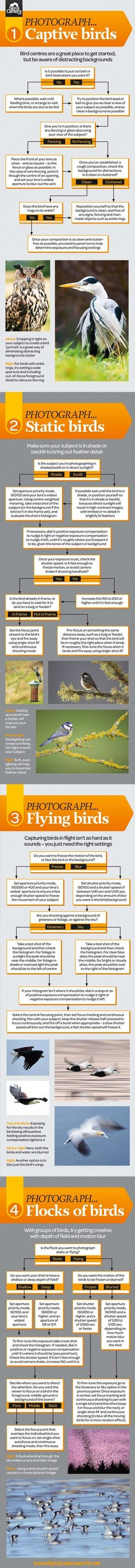 Bird photography cheat sheet, shows how to photograph birds in 4 common situations.