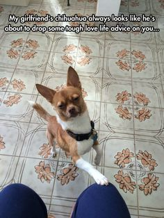 Light Me With Your Wisdom, Chihuahua