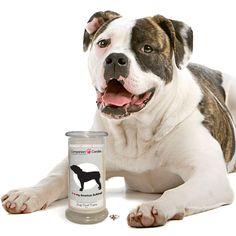 I Love My American Bulldog! - Companion Candles