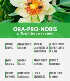 Ora Pro Nobis, Wow Facts, Healing Herbs, Oras, Fruit, Vegetables, Healthy, Nature, Food