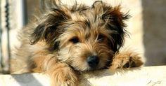 Cómo calmar el malestar estomacal de un perro
