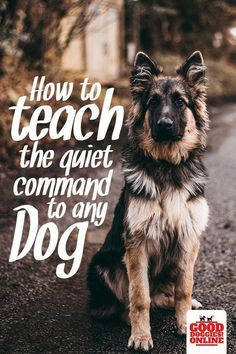 Training your dog is centered on building your relationship with your canine and setting up boundaries. Be firm but consistent and you'll see outstanding results in your dog training adventures. Training Your Puppy, Dog Training Tips, Potty Training, Training Classes, Training Videos, Leash Training, Agility Training, Training Academy, Training Schedule