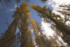 Inspiring Pics♥ 10/22-14 Autumn - formulasydreams