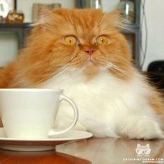 Cats of Instagram   Daily doses of original, cute, cat photos