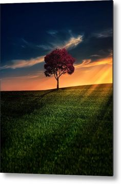 Awesome Solitude Metal Print by Bess Hamiti. All metal prints are professionally printed, packaged, and shipped within 3 - 4 business days and delivered ready-to-hang on your wall. Choose from multiple sizes and mounting options.