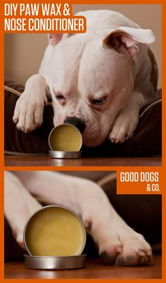 Make your own DIY paw wax and nose conditioner. Does your dog have dry or cracked paw pads? This wax will help keep their paws nice and soft! #DogPaw