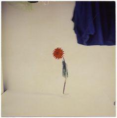 Masao Yamamoto  http://vi.sualize.us/masao_photography_still_life_masao_yamamoto_picture_hkRi.html