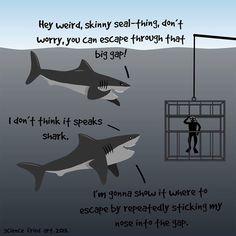 Sharks are nice guys - Imgur