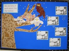 Baby Owl Display, classroom Display, animal, owls, drawing, art, nocturnal, wise owl, night, hunt, Early Years (EYFS), KS1 & KS2 Primary Teaching Resources