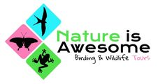 South Florida Birding Tours led by professional Miami bird guides Angel & Mariel Abreu. Nature is Awesome Tours specializes in finding ABA list countable exotics and bird species in South FL and the Miami area.. Birding tours, birdwatching, South Florida, exotic birds, exotic bird species, Miami area, personalized birding tours, bird photography and more.