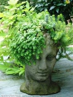 My succulent head!