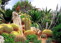 The Exotic Garden - Unique cacti collections images