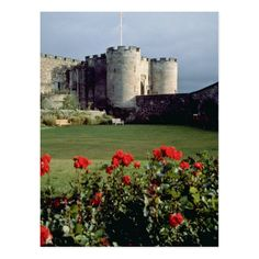 Shop Stirling Castle, Scotland flowers Postcard created by blueyellowtube. Scotland Castles, Scottish Castles, Stirling Castle Scotland, White Flowers, Red Roses, Scotland Nature, Victoria British Columbia, Wedding Color Schemes, Postcard Size