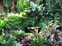 Dennis Hundscheidt's Tropical Paradise in Brisbane, AU ~ <3 THIS! Absolutely EVER<3THING about this !<3! - (from Onslow and Miss B blog)
