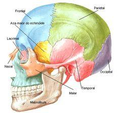 ossos-do-cranio