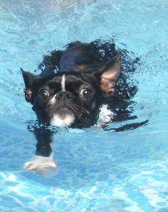 mookie in the pool....