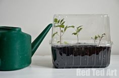 """A super simple DIY propagator to """"make"""" at home. On this post we also share other DIY seedling pots and how to start a container garden. Lots of thrifty gardening ideas! Fun Activities For Kids, Crafts For Kids, Container Gardening, Gardening Tips, Easy Diy, Simple Diy, Super Simple, Green Garden, Garden Crafts"""