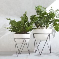 Container gardens are ideal for small patios and balconies.