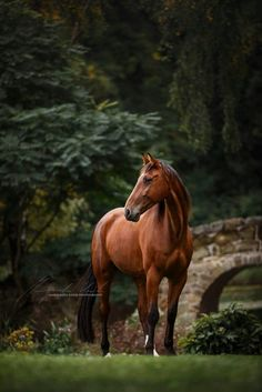 The most amazing landscapes in the world and how to photograph them - Digital Photography Online - wunderschöne Pferde - Beautiful Horse Pictures, Most Beautiful Horses, All The Pretty Horses, Animals Beautiful, Cute Horse Pictures, Majestic Horse, Majestic Animals, Cute Horses, Horse Love