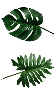 I find the leaves of these plants really nice to look at: • Monstera deliciosa • Split leaf philodendron