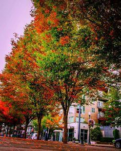 Changing tree leaves, Portland, Oregon #run #road #runs #runner #runners #runningcommunity #pdx #portland #wideangle #tree #pnw #pnwlife #pnwonderland #landscape #landscapes #landscape_lovers #landscape_captures #oregon #contrast #love  #landscapelovers #neverstopexploring #exploreoregon #oregonnw #nikon #landscapepics #nature #sunset #katuweather #kptv12