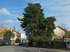 Le n°49, route de Chancy (à droite) vu depuis le carrefour des Esserts, en novembre 2008. Images, Street View, Plants, November, Searching, Planters, Plant, Planting