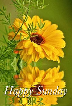 🌻🌻 Good morning to all my dear konda cousins 🌻🌻 Good Day Wishes, Sunday Wishes, Morning Greetings Quotes, Good Morning Greetings, Sunday Morning Quotes, Good Morning Happy Sunday, Happy Sunday Quotes, Good Morning Flowers, Good Morning Picture