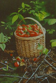 Collector Prints | Bob Timberlake: 1980, Strawberries