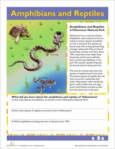 reptiles and amphibians on pinterest amphibians reptiles and animal classification. Black Bedroom Furniture Sets. Home Design Ideas