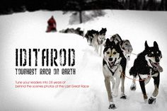 Alaska Stock Images - Gallery of Iditarod Race Pictures