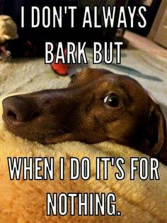Dachshund funny photo about barking Dachshund Quotes, Dachshund Funny, Dachshund Puppies, Weenie Dogs, Dachshund Love, Dog Quotes, Funny Dogs, Funny Animals, Daschund