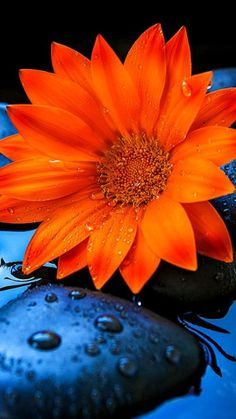 Beautiful Flowers || Flowers || Nature Photography || Flower Photography || Nature Wallpaper