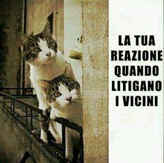-- #ridere #ridiamo #humor #satira #umorismo #satirapolitica #sbruffonate…