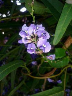 Tercera foto de flores 2014