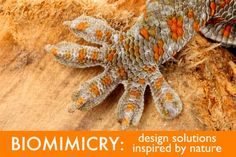 How Can Designers and Architects Use Biomimicry to Stay on the Cutting Edge of Innovation? | Inhabitat - Sustainable Design Innovation, Eco ...